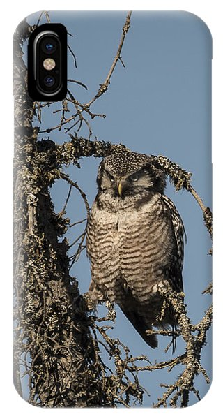 Hawk Owl Gaze IPhone Case