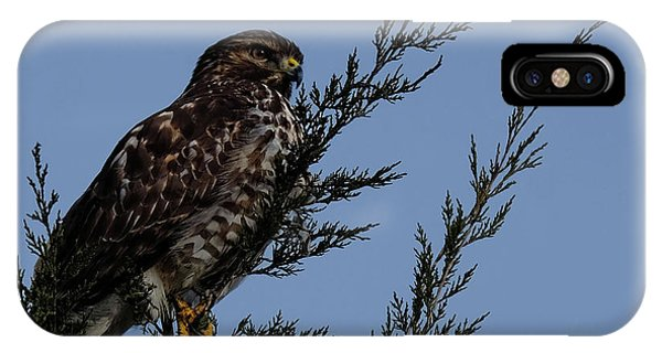Red Shoulder  Hawk Perched High IPhone Case