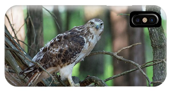 Hawk Portrait IPhone Case