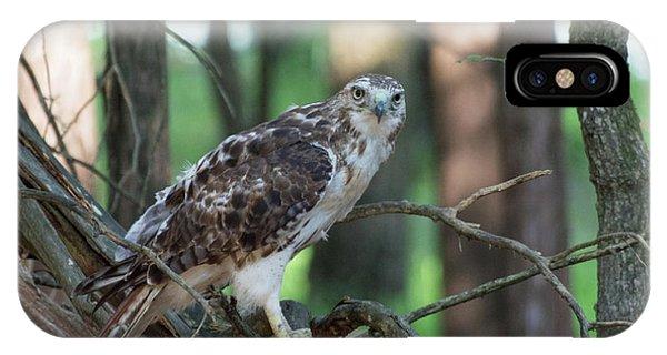Hawk Portrait IPhone Case