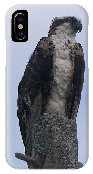 Hawk Pose IPhone Case