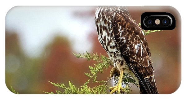 Red Shoulder Hawk Profile IPhone Case