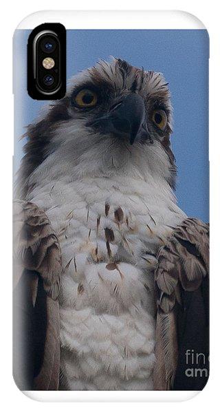 Hawk Stare IPhone Case