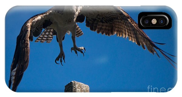 Hawk Taking Off IPhone Case