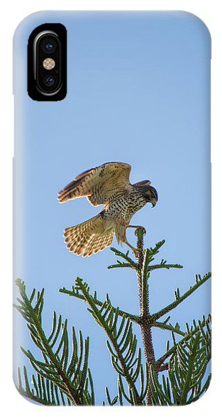 Hawk With Regal Landing IPhone Case
