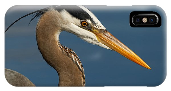 Head Of A Great Blue Heron IPhone Case