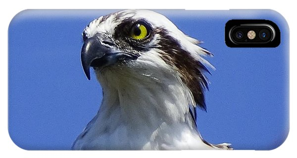 IPhone Case featuring the photograph Heads Up by Cindy Charles Ouellette