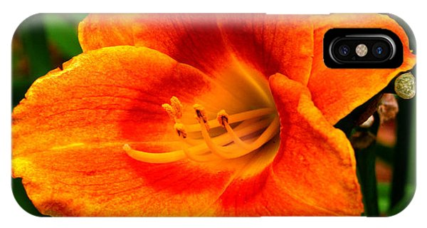 Heart Lily Phone Case by Paul Anderson