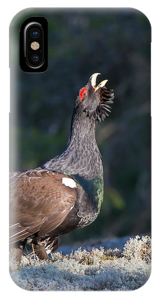 Heather Cock In The Morning Sun IPhone Case
