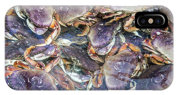 Alive iPhone Case - Heavenly Crabs by Betsy Knapp