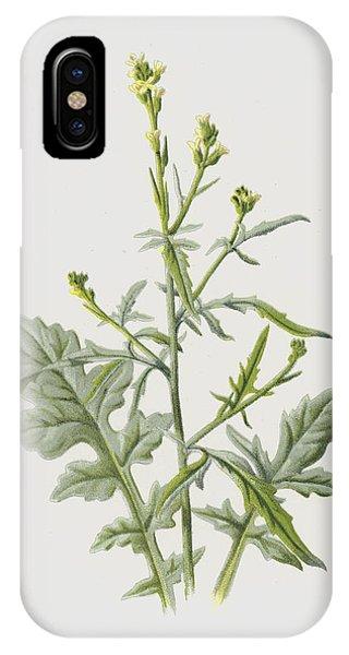 Mustard iPhone Case - Hedge Mustard by Frederick Edward Hulme