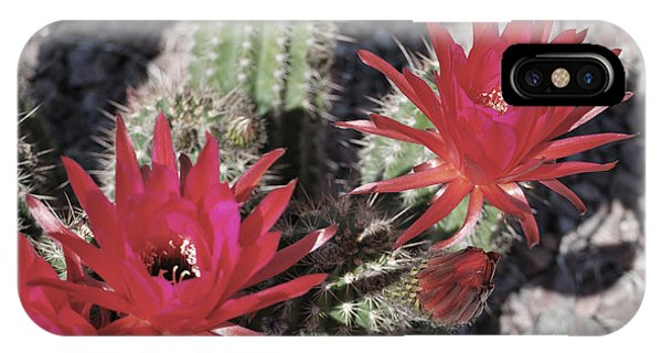Hedgehog Cactus IPhone Case