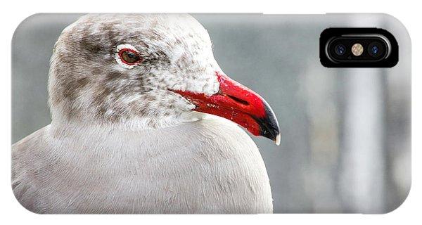 Heerman's Gull IPhone Case