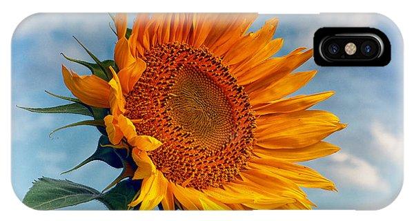 Helianthus Annuus Greeting The Sun IPhone Case