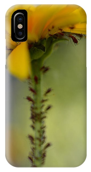 Heliopsis Infested IPhone Case