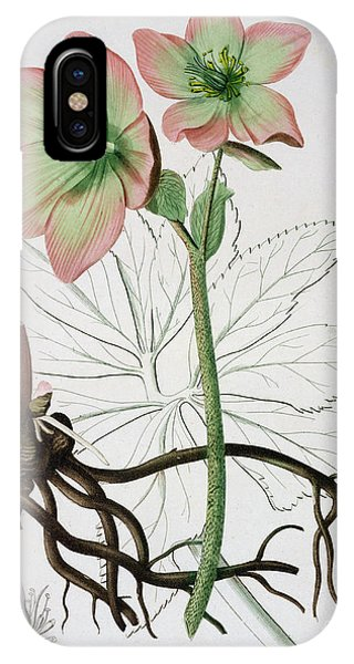 Flora iPhone Case - Helleborus Niger, Commonly Called Christmas Rose Or Black Hellebore, by LFJ Hoquart
