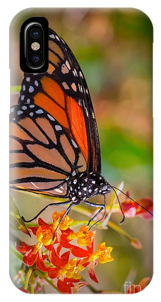 Hello Butterfly IPhone Case