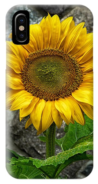 Hello Sun Shine Phone Case by Heather Kertzer