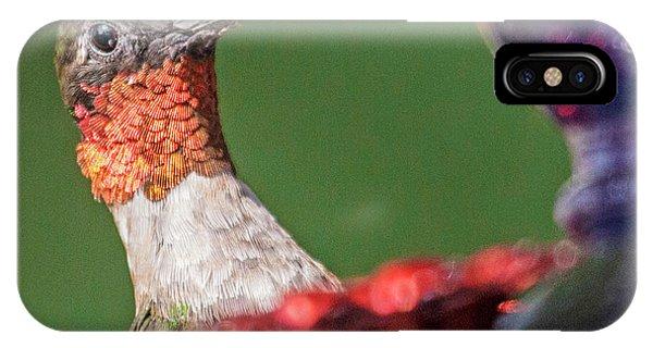 Beautiful Hummingbird iPhone Case - Hello There by Betsy Knapp