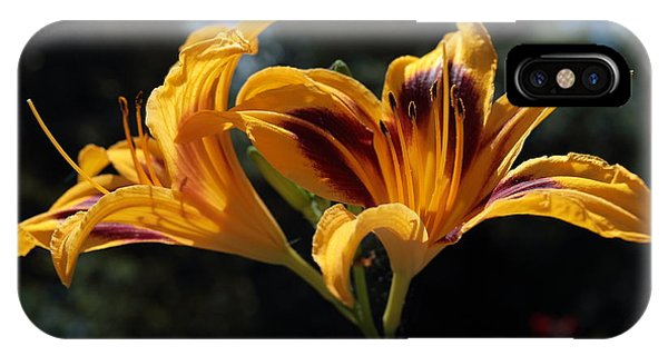 Hemerocallis IPhone Case