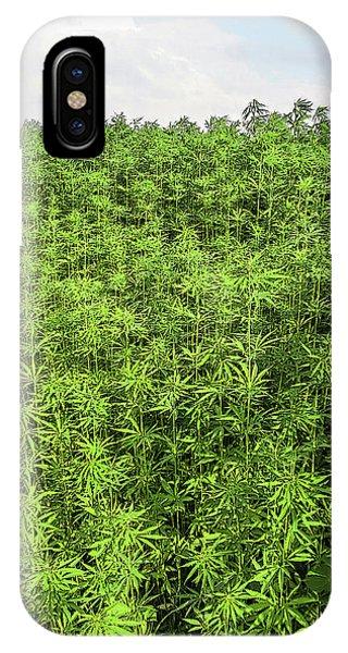 Hemp Plantation IPhone Case