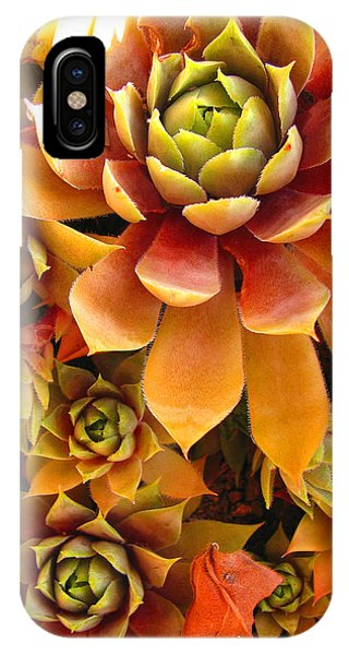 Hen And Chicks - Perennial IPhone Case