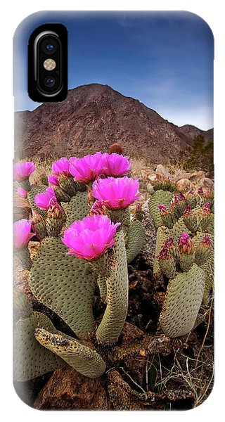 Succulent iPhone Case - Henderson Canyon Beavertail by Peter Tellone