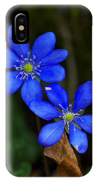 Hepatica Nobilis IPhone Case