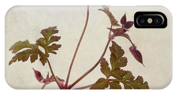 Green iPhone Case - Herb Robert - Wild Geranium  #flower by John Edwards