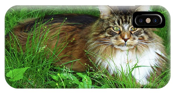 IPhone Case featuring the photograph Hercules Maine Coon Elegance by Roger Bester