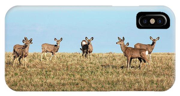 Mule Deer iPhone Case - Herd Of Deer by Todd Klassy