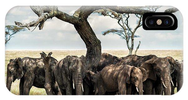 Herd Of Elephants Under A Tree In Serengeti IPhone Case