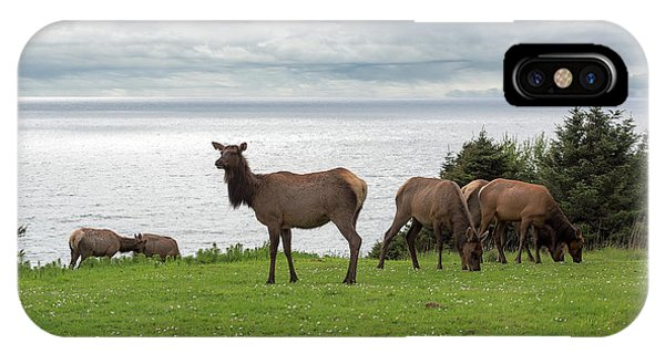 iPhone Case - Herd Of Elk At Ecola State Park by David Gn