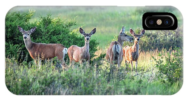 Mule Deer iPhone Case - Herd Of Muleys by Todd Klassy