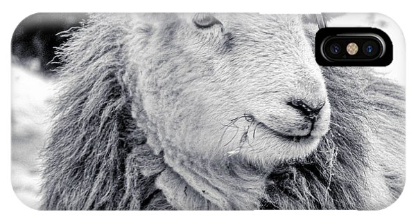 Herdwick Sheep IPhone Case
