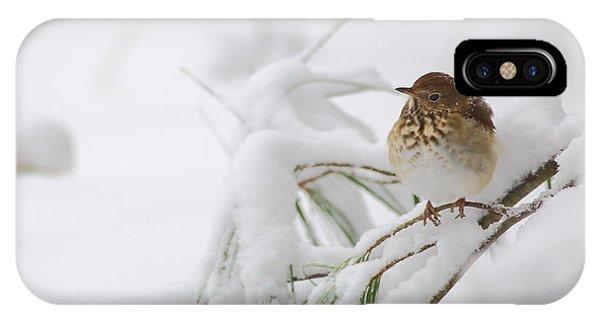 Hermit Thrush In Snow IPhone Case
