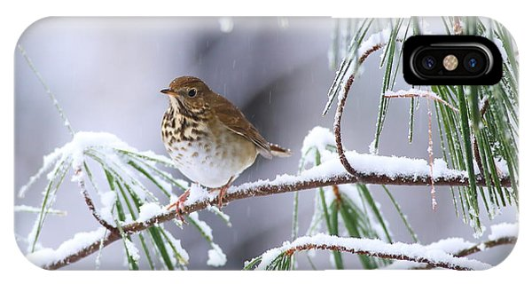 Hermit Thrush In Snowy Pine IPhone Case