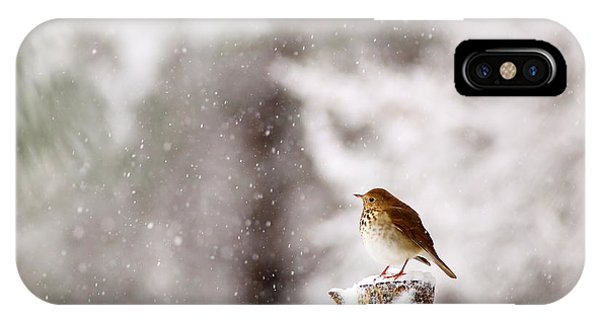 Hermit Thrush On Post In Snow IPhone Case
