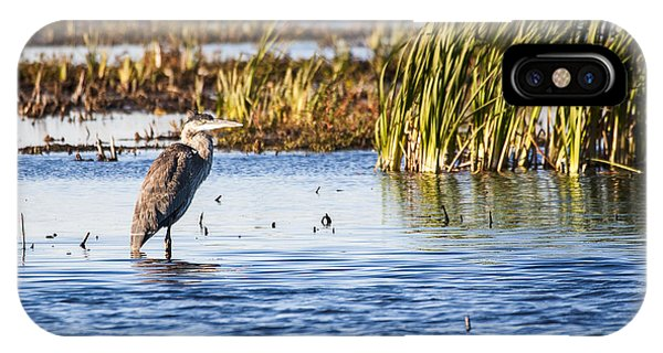 Heron - Horicon Marsh - Wisconsin IPhone Case