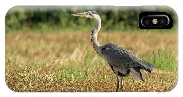 Heron In The Field IPhone Case