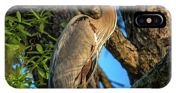 Heron In The Pine Tree IPhone Case