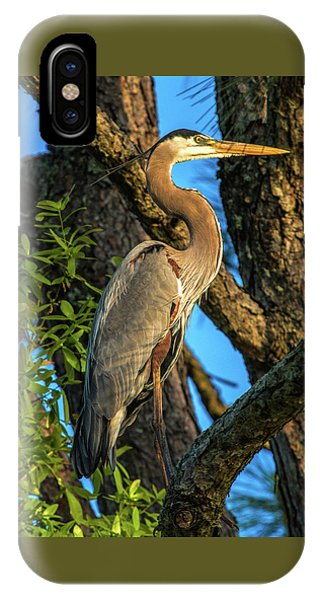 Heron In The Pine Tree IPhone Case