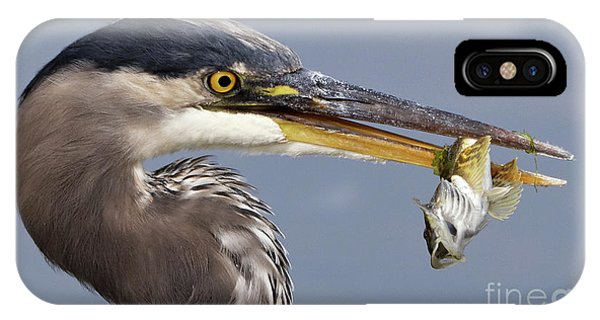 Herons Appetizer IPhone Case