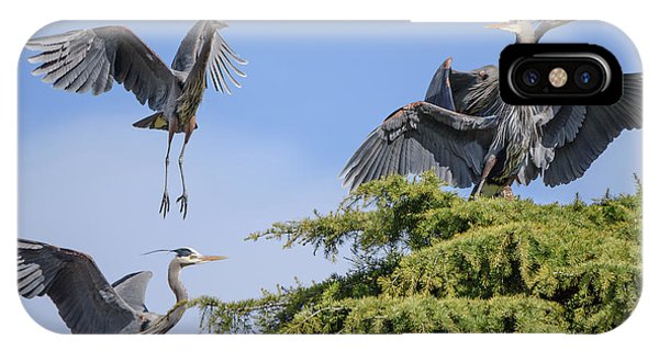 Herons Mating Dance IPhone Case