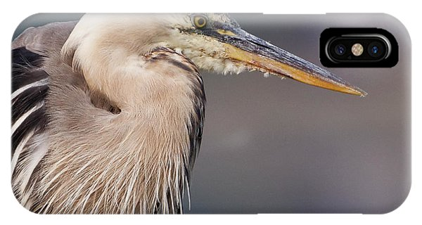 Herons Pause IPhone Case