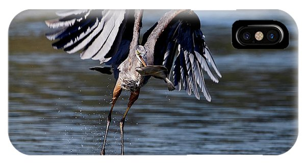 Great Blue Heron In Flight With Fish IPhone Case