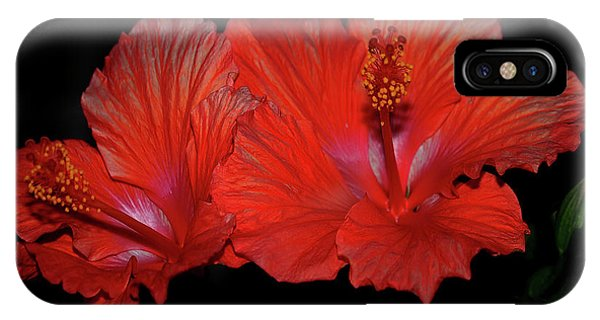 Shrub iPhone Case - Hibiscus Blooms Aglow by DigiArt Diaries by Vicky B Fuller