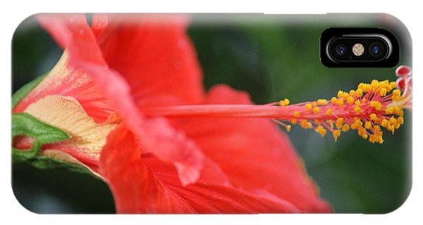 Hibiscus Closeup IPhone Case