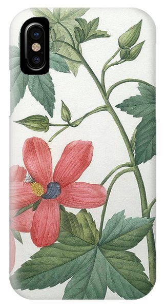Hibiscus Flower iPhone Case - Hibiscus by Pierre Joseph Redoute