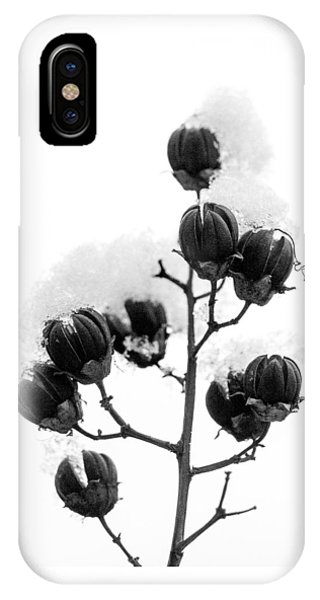 Hickory Tree In Winter IPhone Case